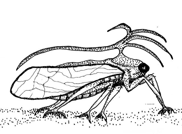 CicadaJillha